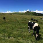 美ヶ原高原の山本小屋ふる里館から美しの塔へ、牛さん見ながら高原散歩!