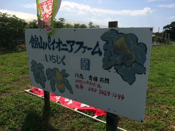 ichijiku-gari1.JPG