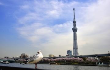 skytree-odaiba.jpg