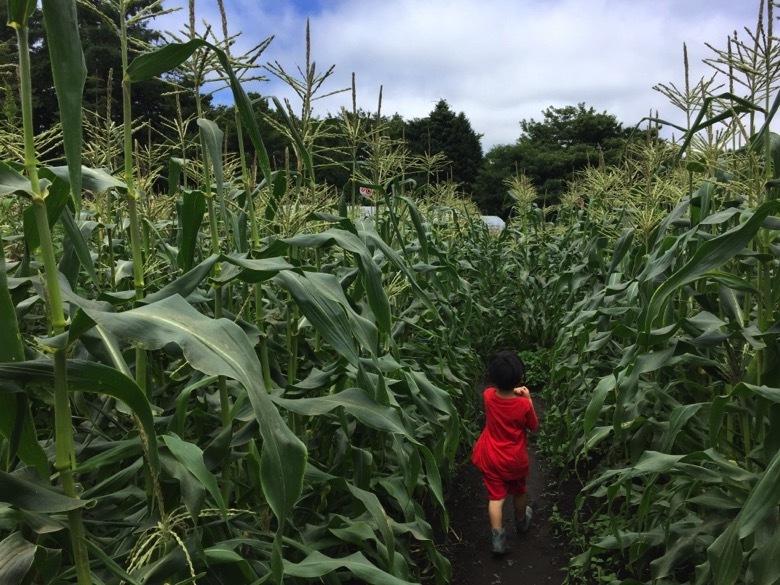 もろこし村